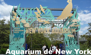 Aquarium de New York