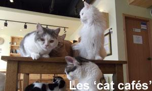 Les Cat Cafés