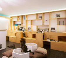 Cat Cafes a new york